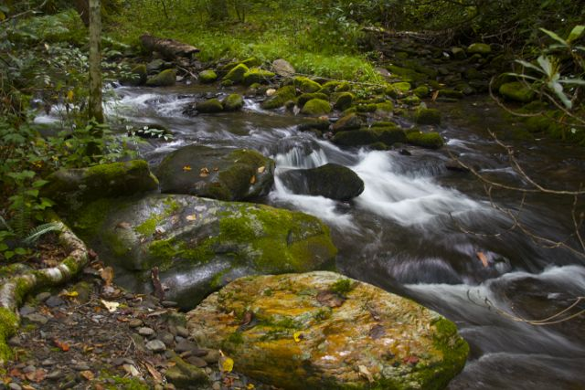 Cataloochee Valley Creek