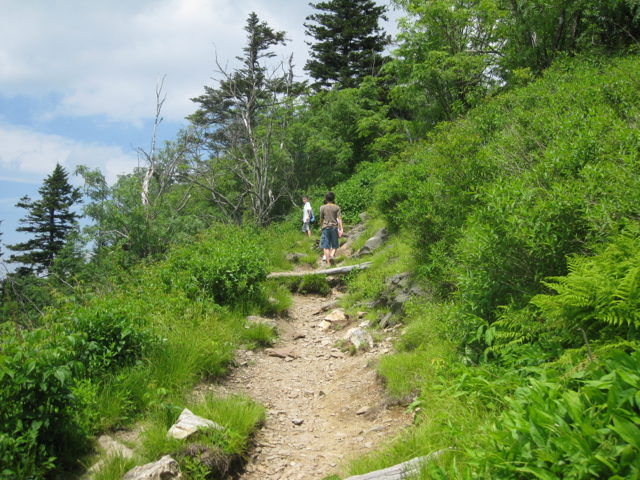 Hiking Trails In The Blue Ridge Our Top 10 Family