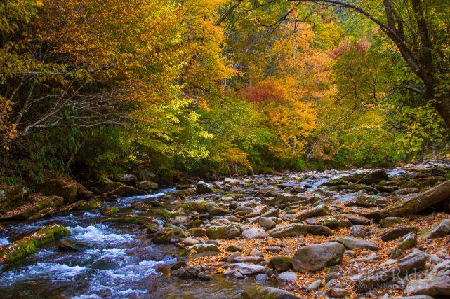 Fall Color at Deep Creek
