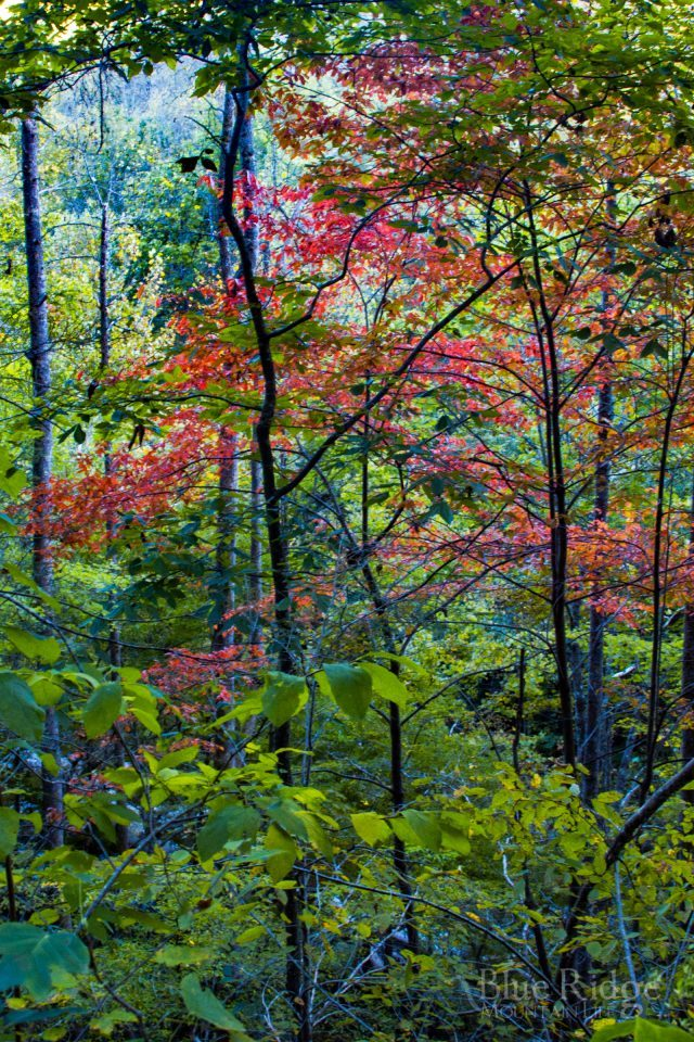 2016 Fall Color, Big Creek