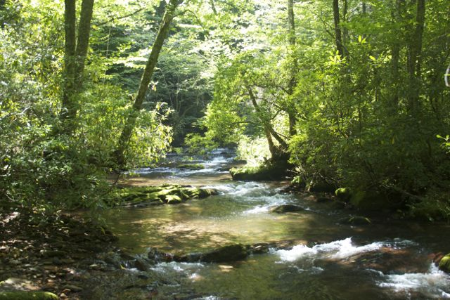 Caldwell Fork Creek