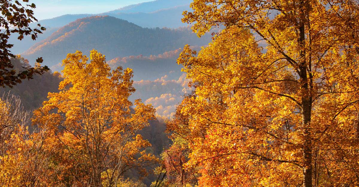 Fall Foliage 2018 Forecast And Guide