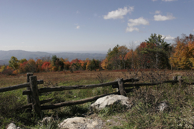 Fall at Roan Mountain
