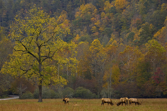 Fall in Cataloochee Valley
