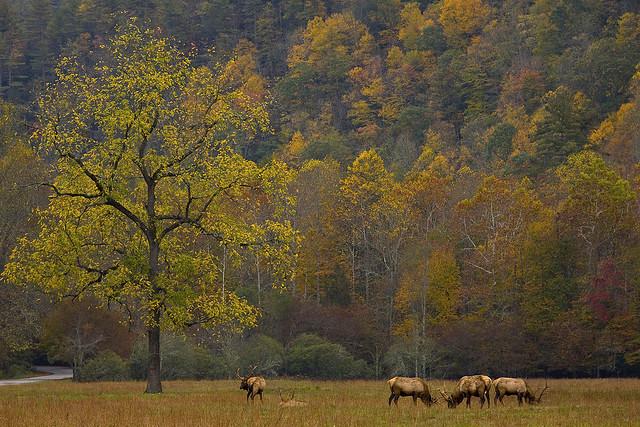 Fall in Cataloochee Valley
