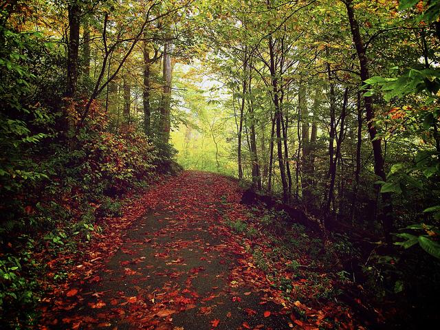 Fall hiking trail boone nc