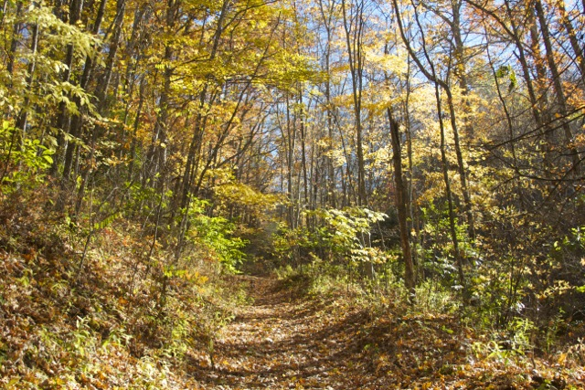 Trail to Dill Falls
