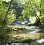 Boogerman Trail