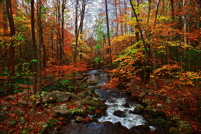 Fall Roaring Fork