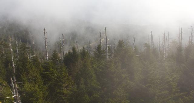 smoky-trees