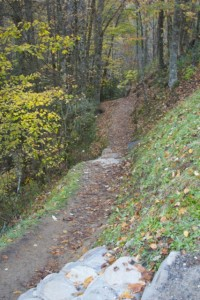 Trail to Soco Falls