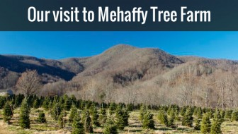 Mehaffey Tree Farm NC Christmas Trees