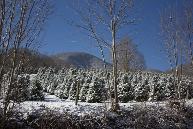 Mehaffey Tree Farm after a snow.