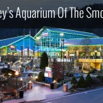Ripley's Aquarium Gatlinburg TN