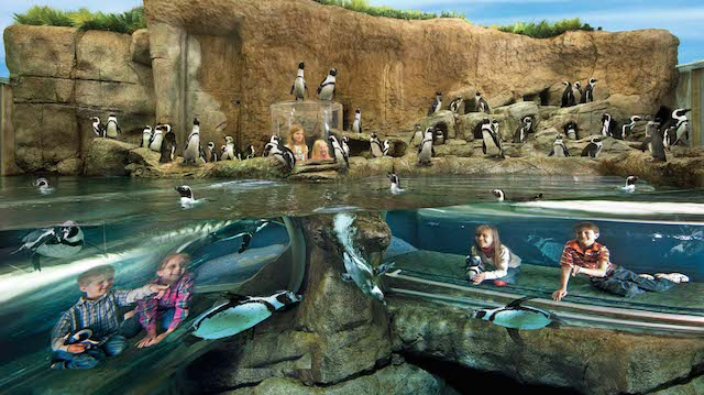 Penguin Tubes