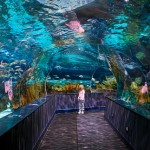 Shark Lagoon Tunnel