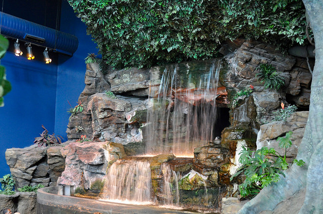 Waterfalls at the entrance to the Tropical Rain Forest Exhibit