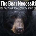 The Black Bear Necessities