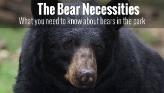 The Black Bear Necessities