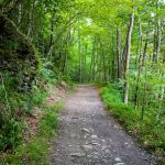 Big Creek Trail – Great Smoky Mountains National Park