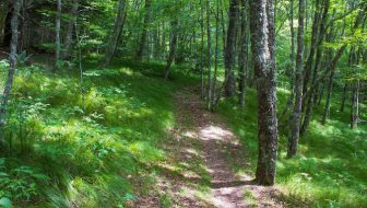 Flat Creek Trail Great Smoky Mountains National Park