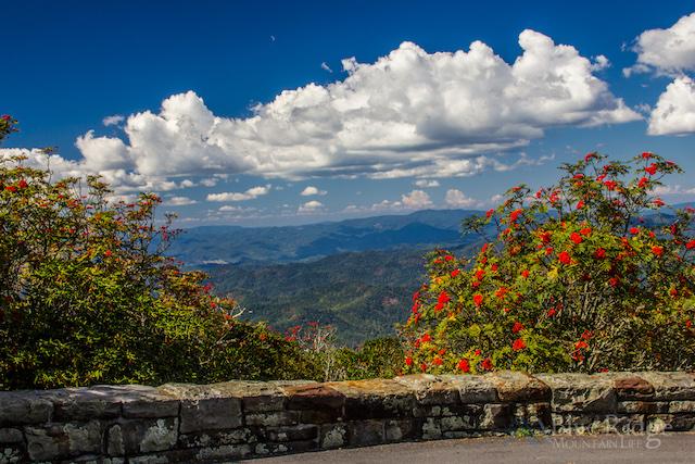Craggy Pinnacle Mountain Ash