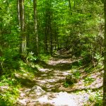 Gabes Mountain Trail to Hen Wallow Falls