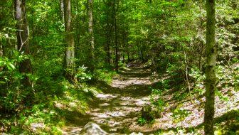 Gabes Mountain Trail to Hen Wallow Falls