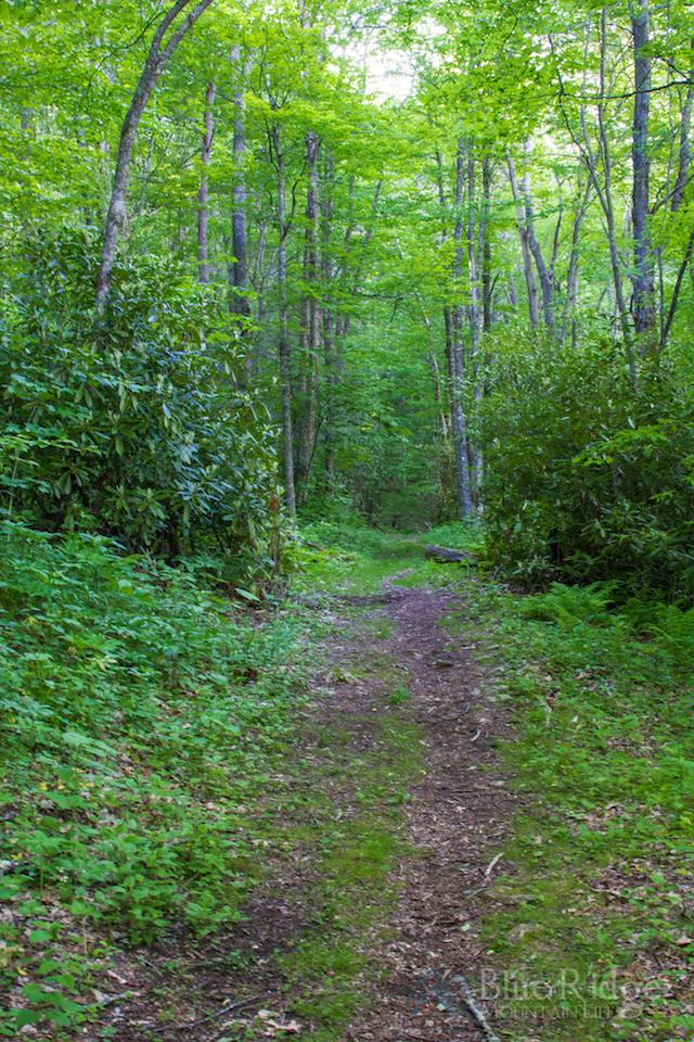 Ferguson Cabin Trail