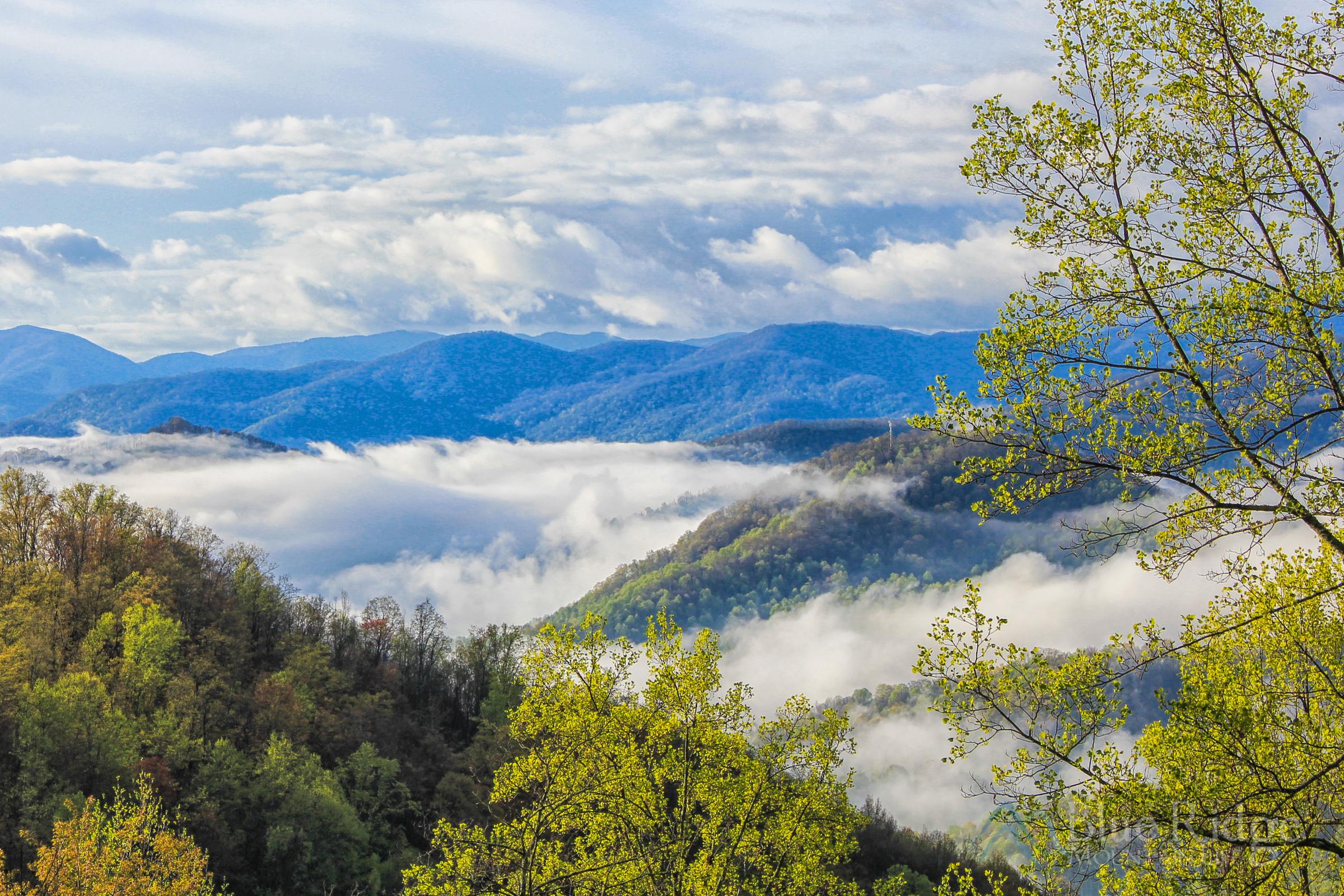 Spring in the Blue Ridge