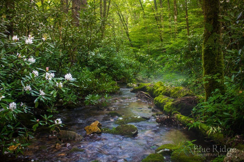 Flat Creek Trail
