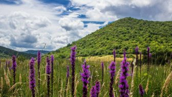 Top Spring Wildflower Hikes in the Blue Ridge Mountains