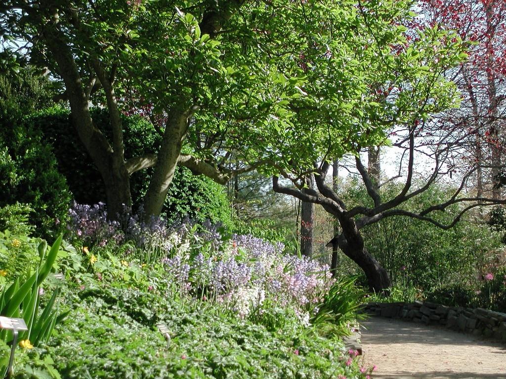 NC Arboretum Garden