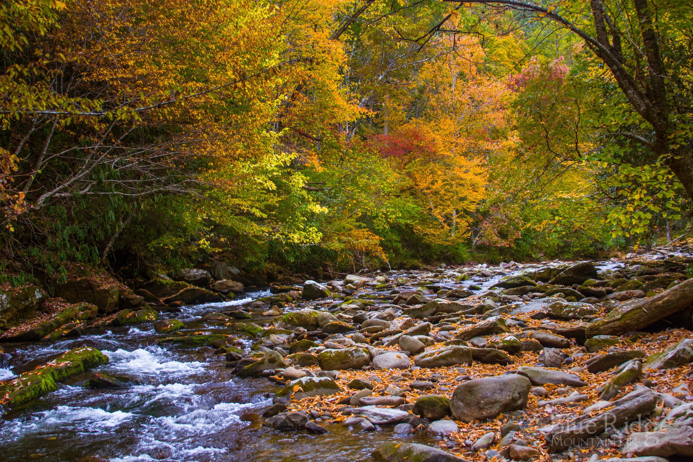 Fall at Deep Creek, Great Smoky Mountains National Park