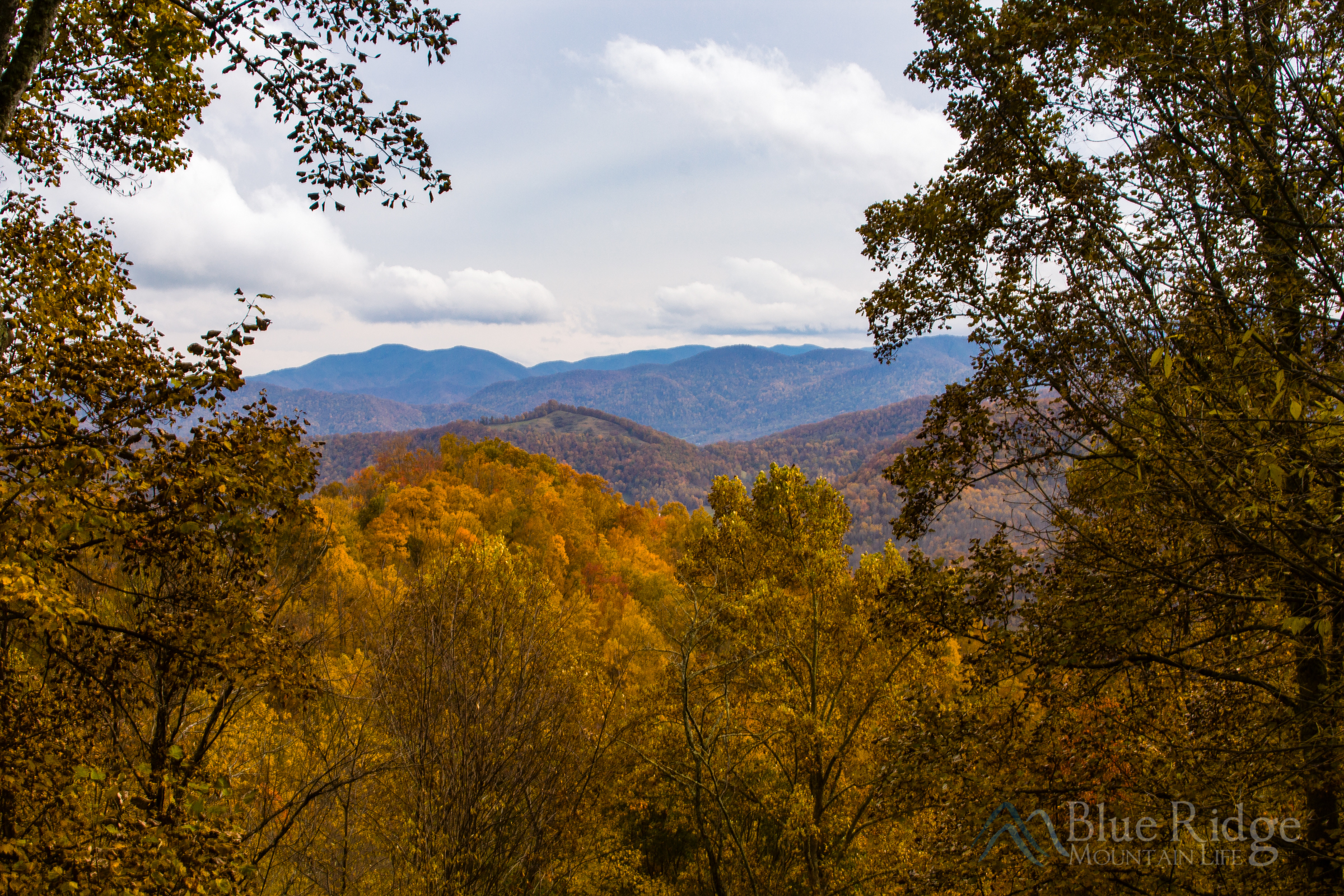 Fall Color Maggie Valley NC