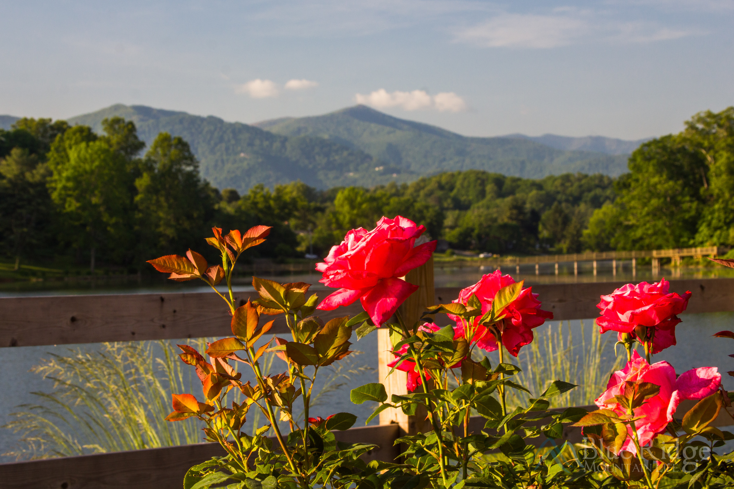 Rose Walk, Lake Junaluska