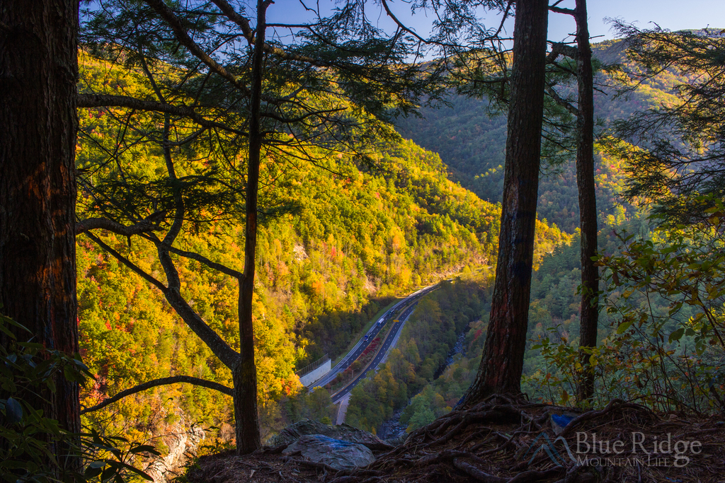 Buzzard's Roost North Carolina