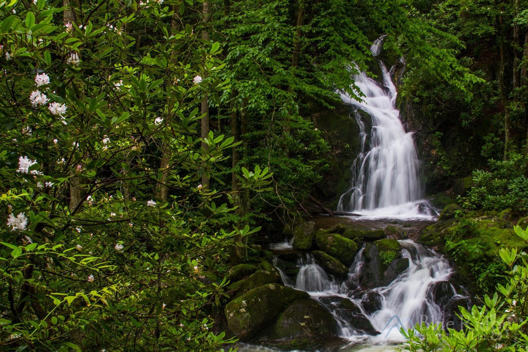 Spring at Big Creek