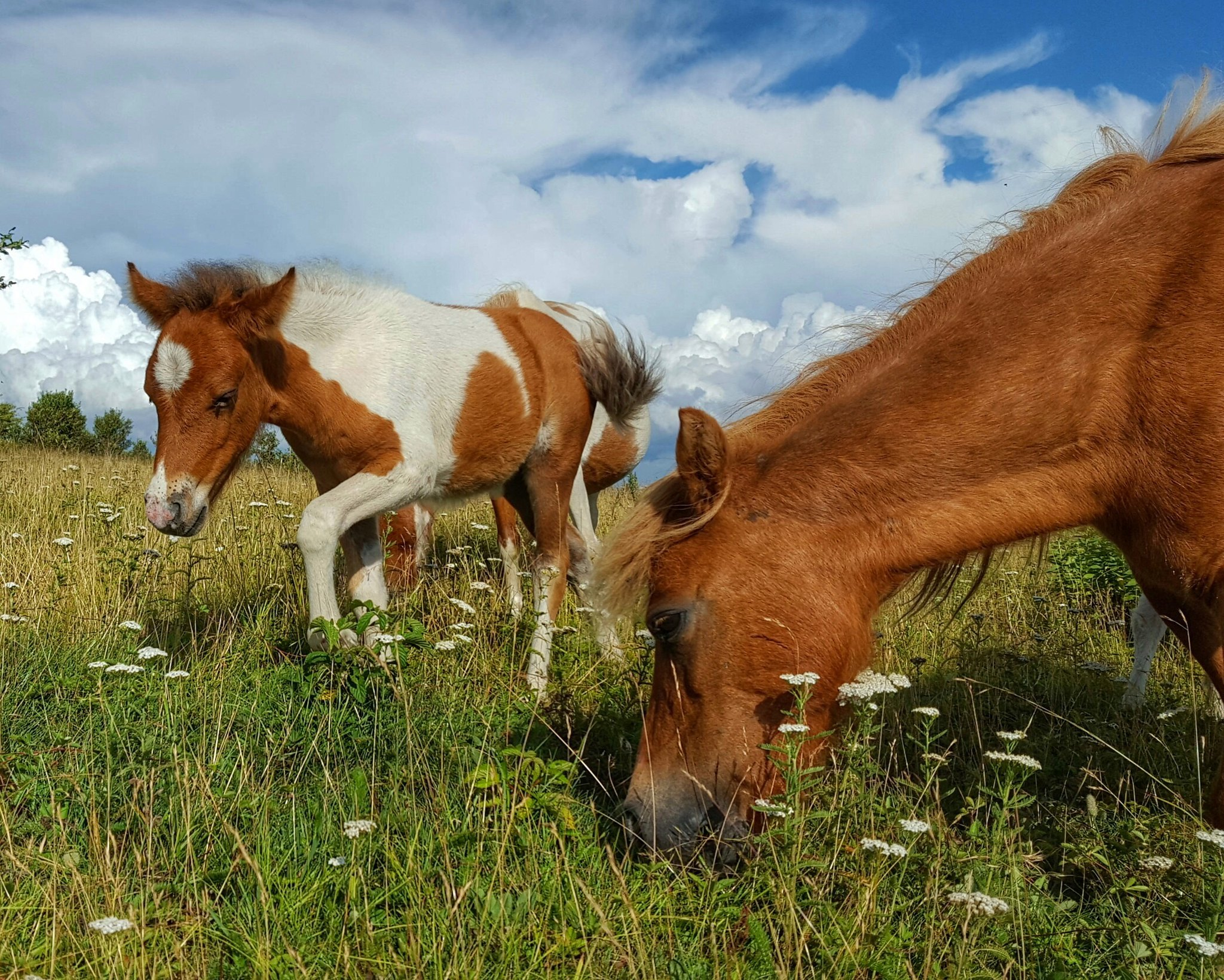 Ponies at Grayson Highlands State Park