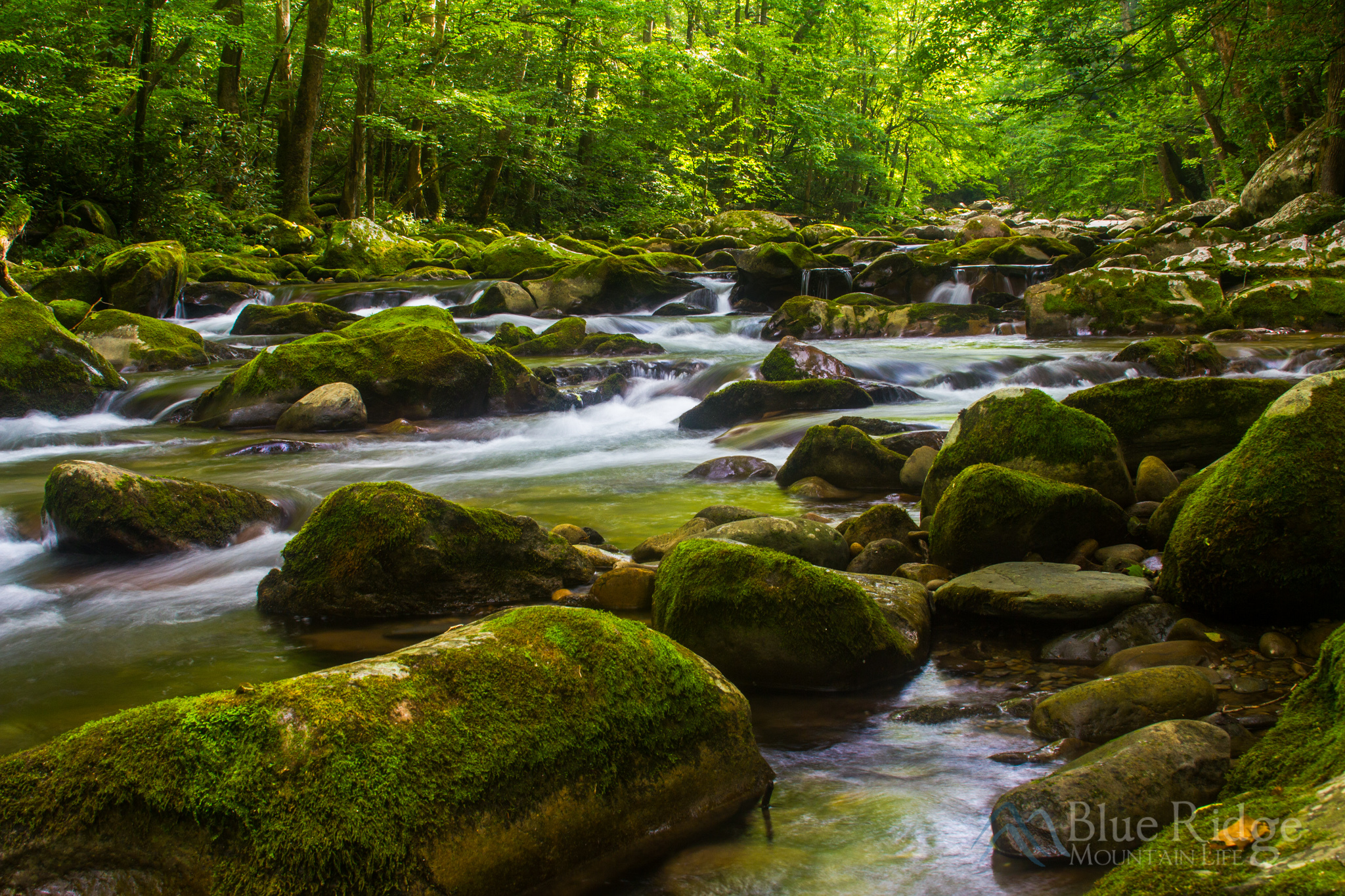 Big Creek Great Smoky Mountains
