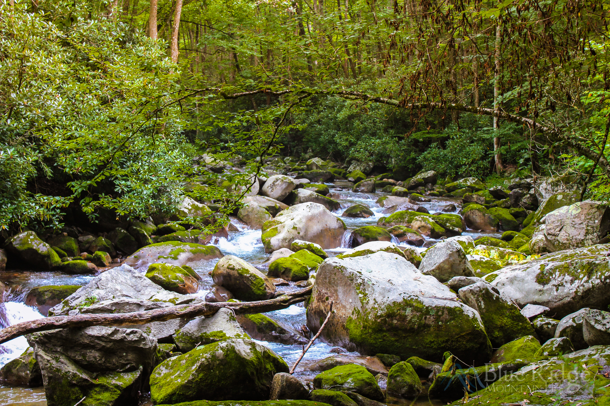 Big Creek, Great Smoky Mountains National Park