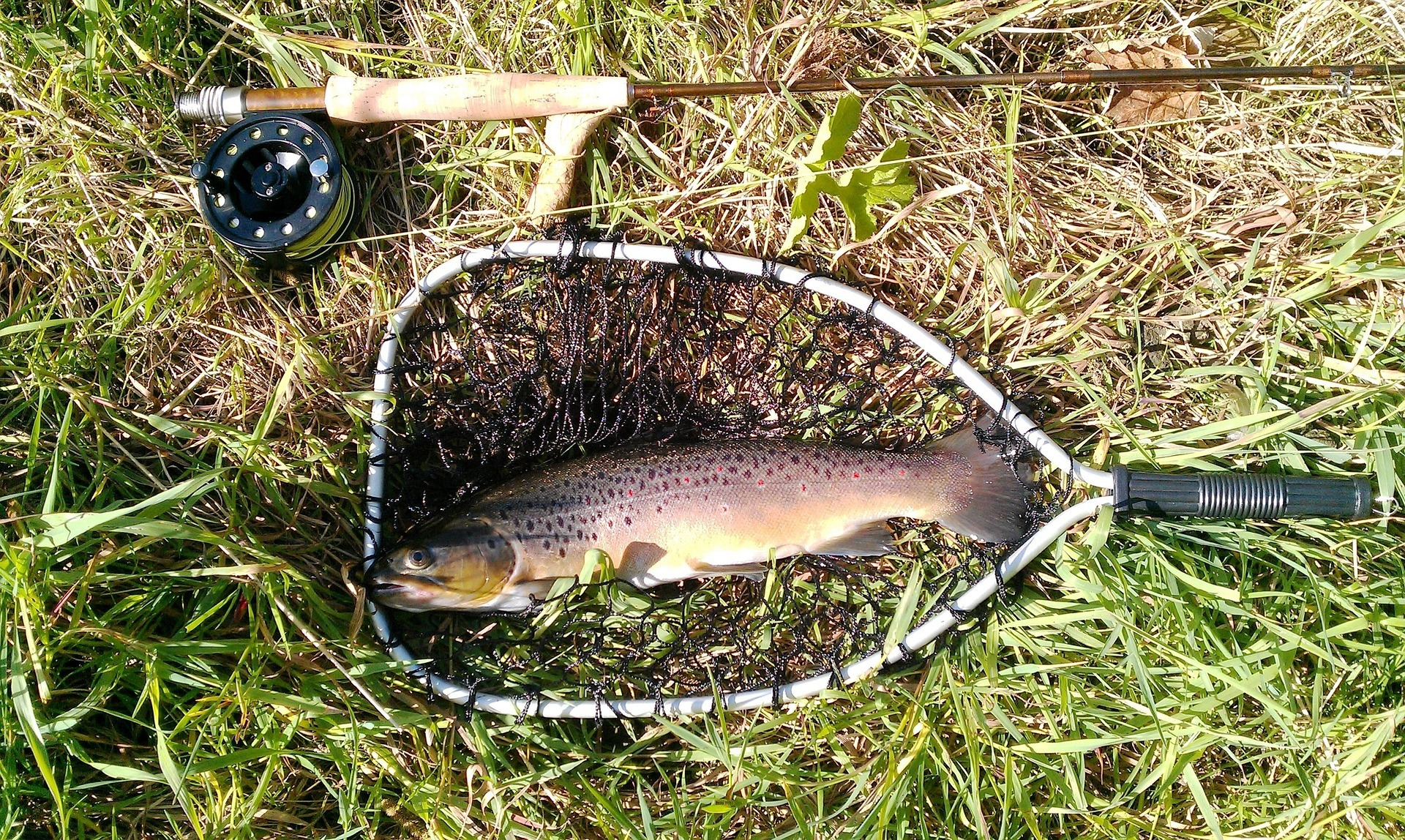 Fly Fishing for Beginners – A Complete Guide - Blue Ridge Mountain Life