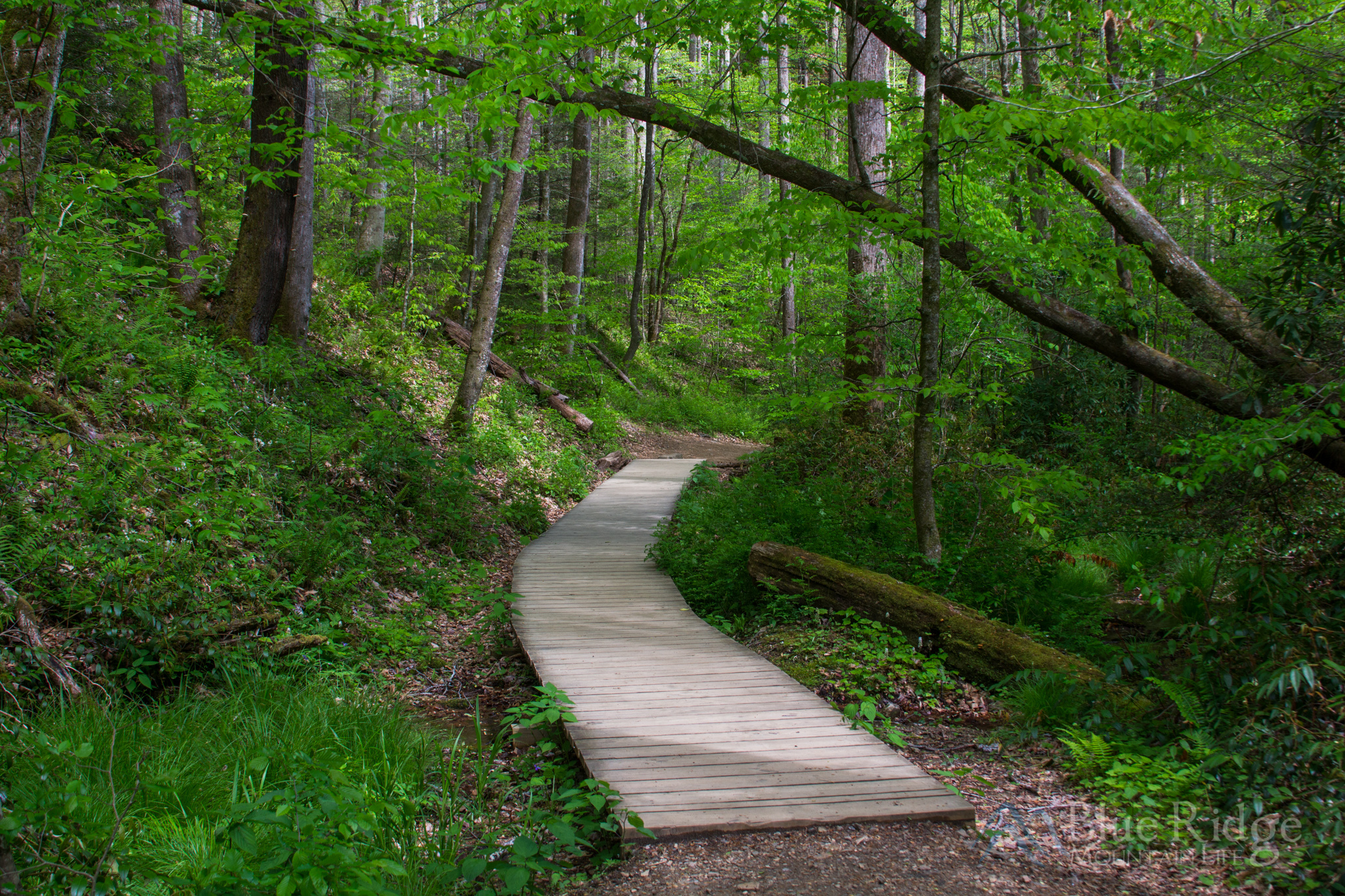 Wooden walkway on Moore Cove Falls Trail