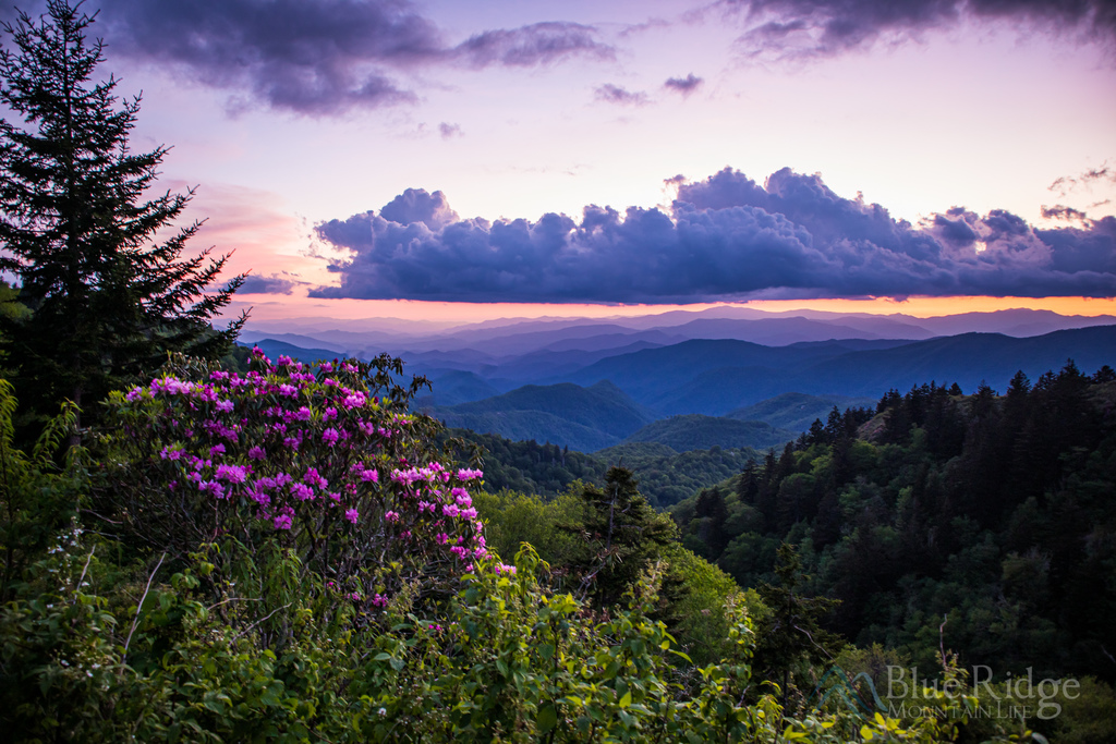 22 Places for Spring Blooms in the Blue Ridge Mountains