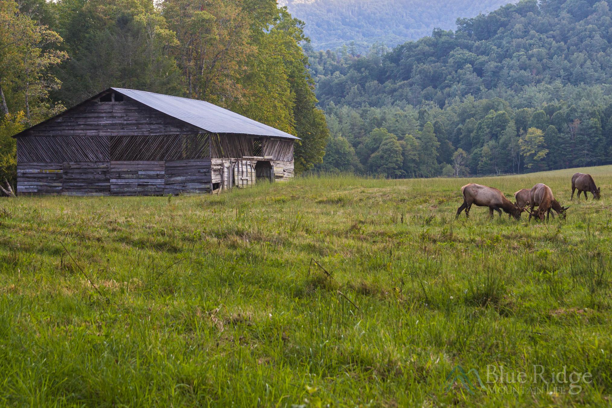 Cataloochee Valley Great Smoky Mountain National Park