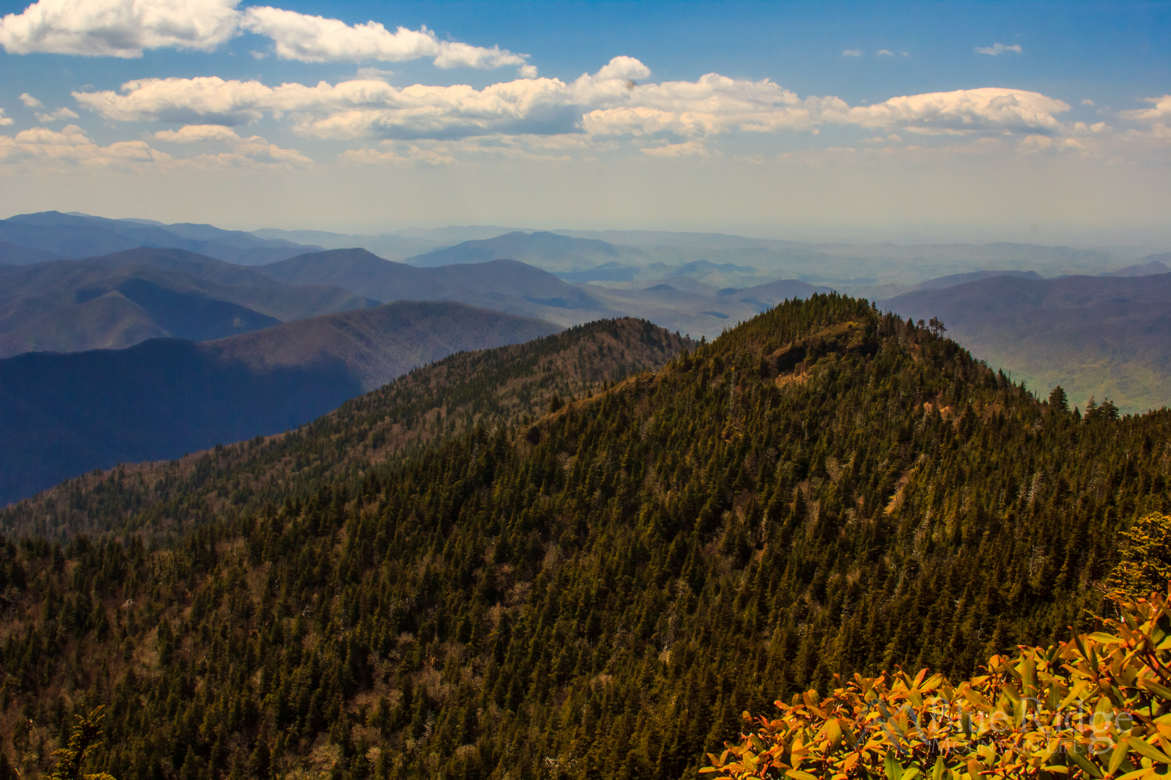 Top of Mount LeConte
