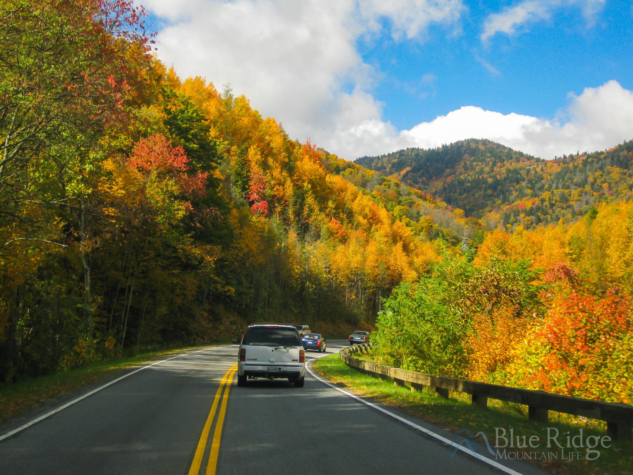 Fall on Newfound Gap Rd