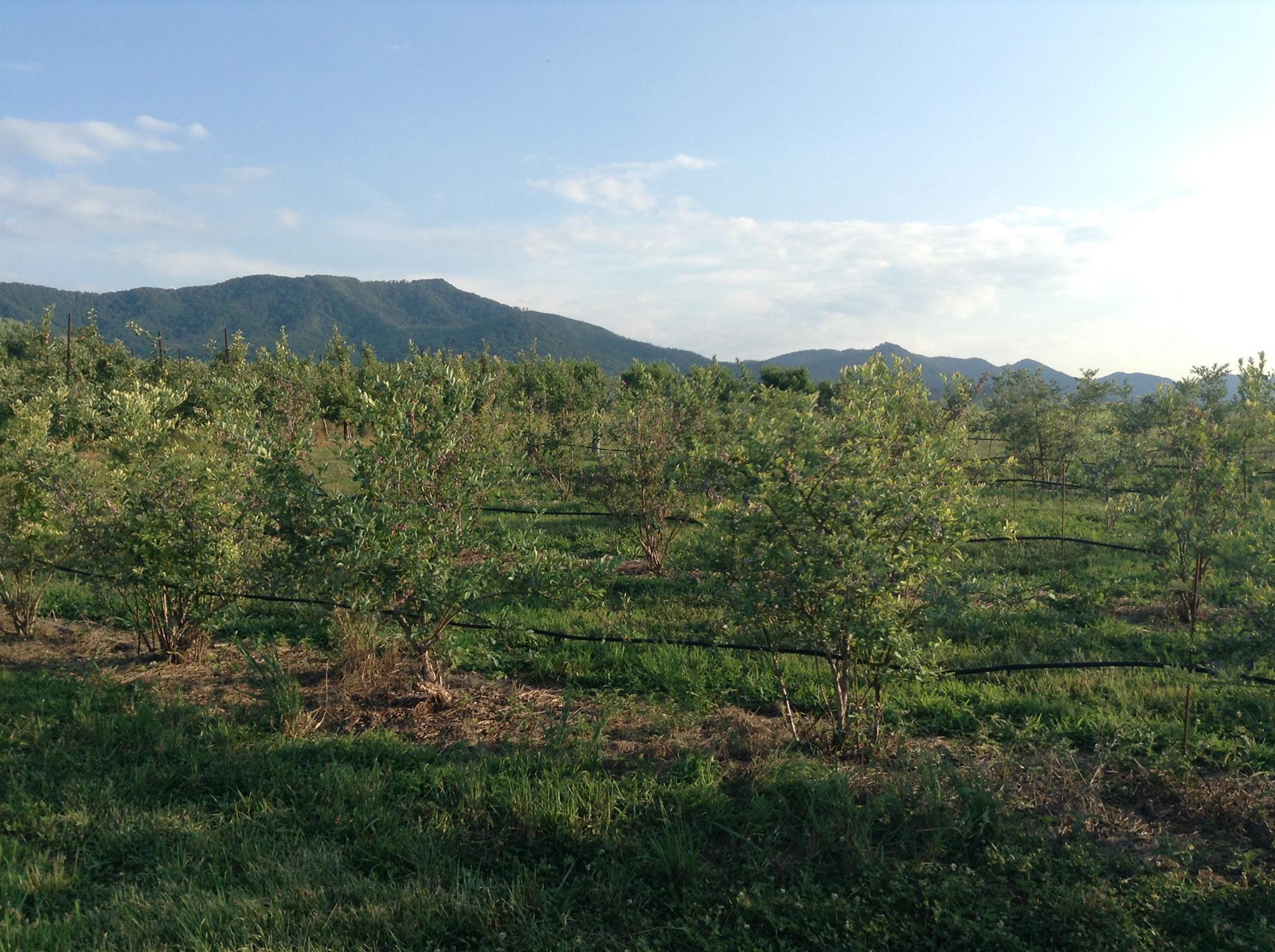 Buffalo Trail Orchard