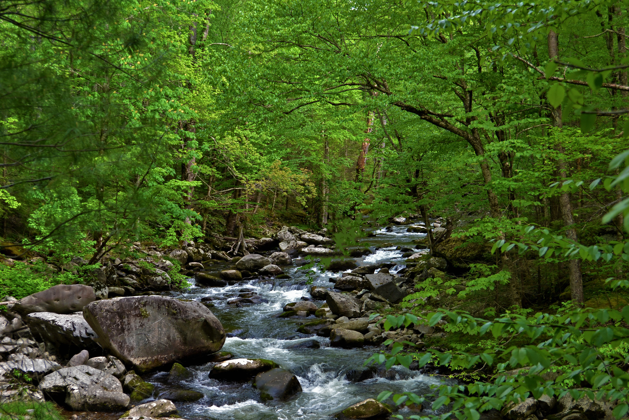 Tremont Great Smoky Mountains National Park